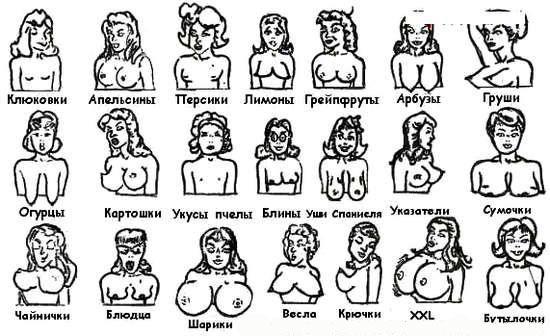 формы женской груди народная классификация